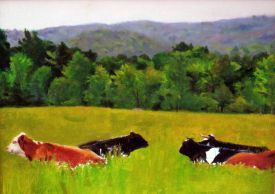 Cummington Cows2 19 275 300 80